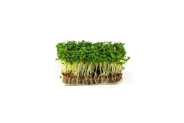Herbs - tuinkers