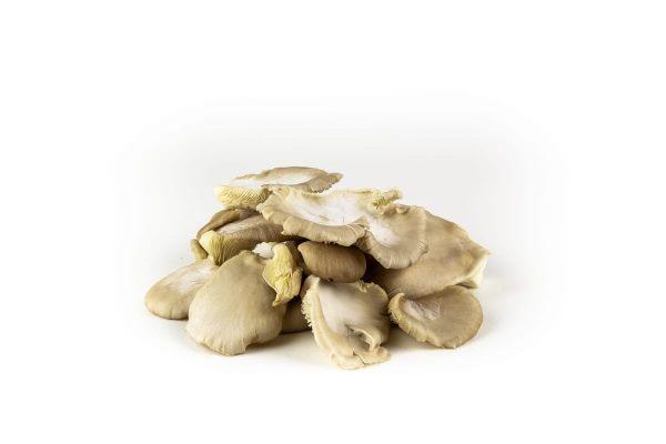 Mushroom - oesterzwam